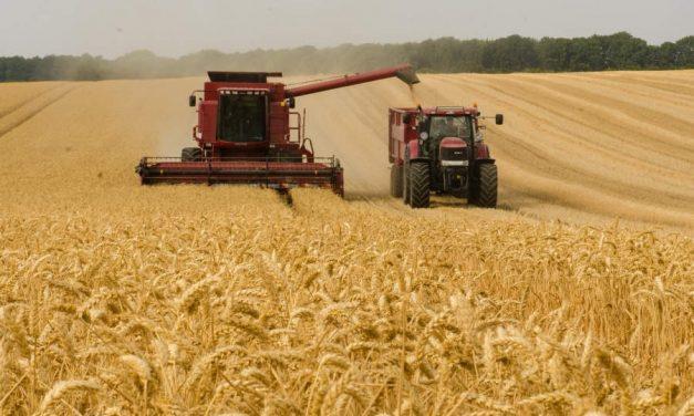 O veste bună mult așteptată: producție record la recolta de grâu, 11,33 milioane de tone