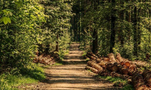 EP finlandez: Nu există o pădure europeană, statele trebuie să-și facă singure politica forestieră